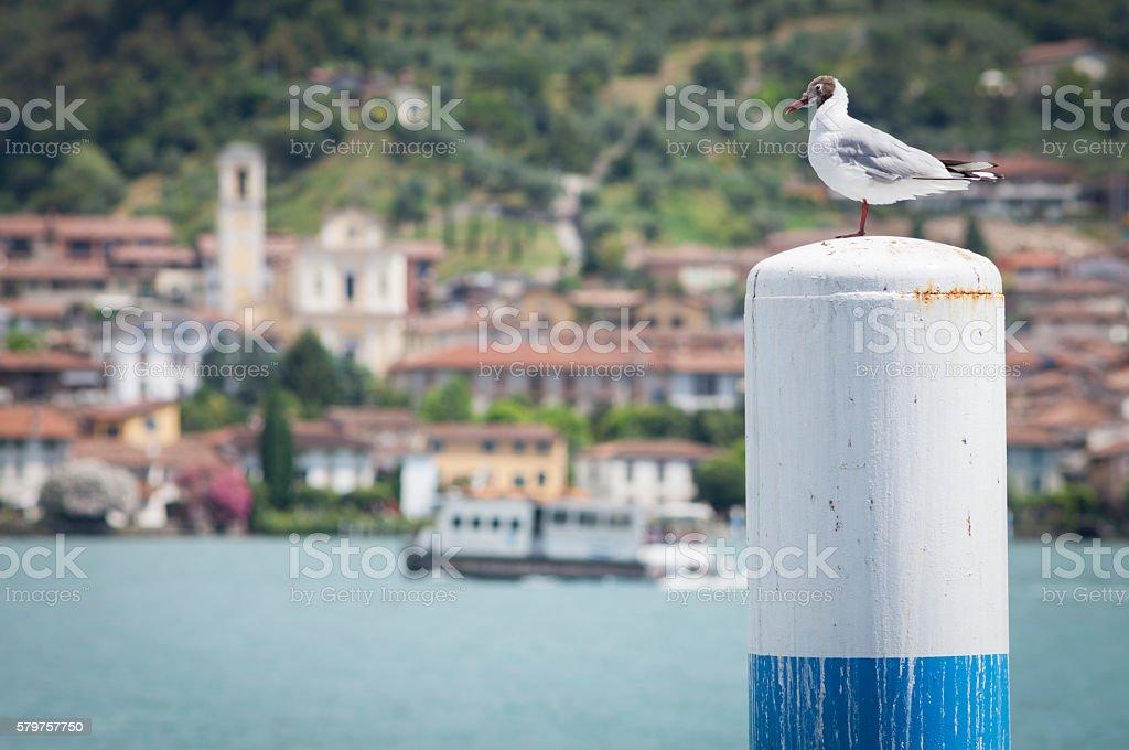 Seagull On Pole With Lake Village Background, Iseo Italy stock photo