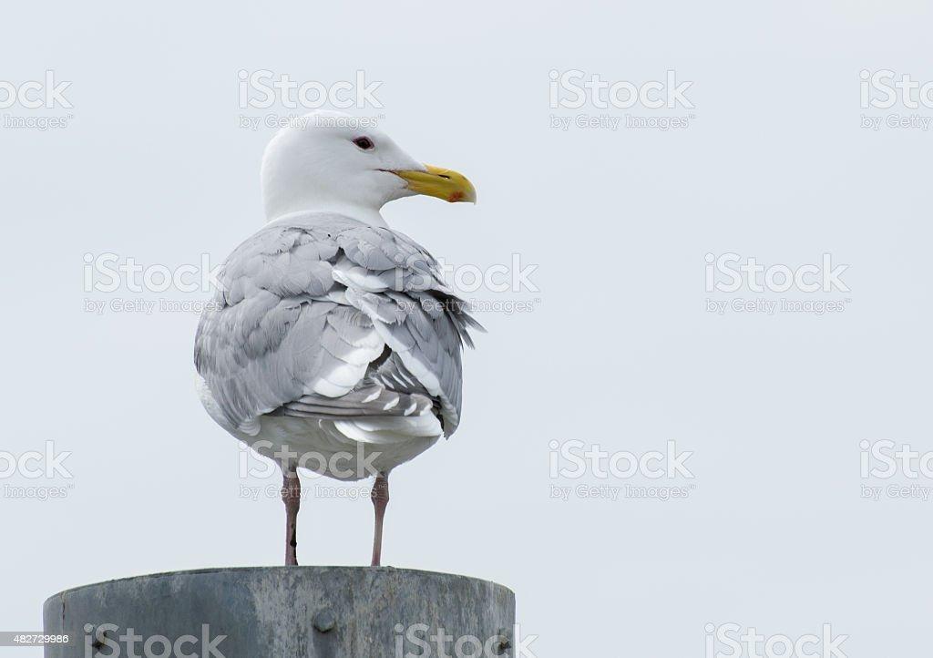 seagull on post stock photo
