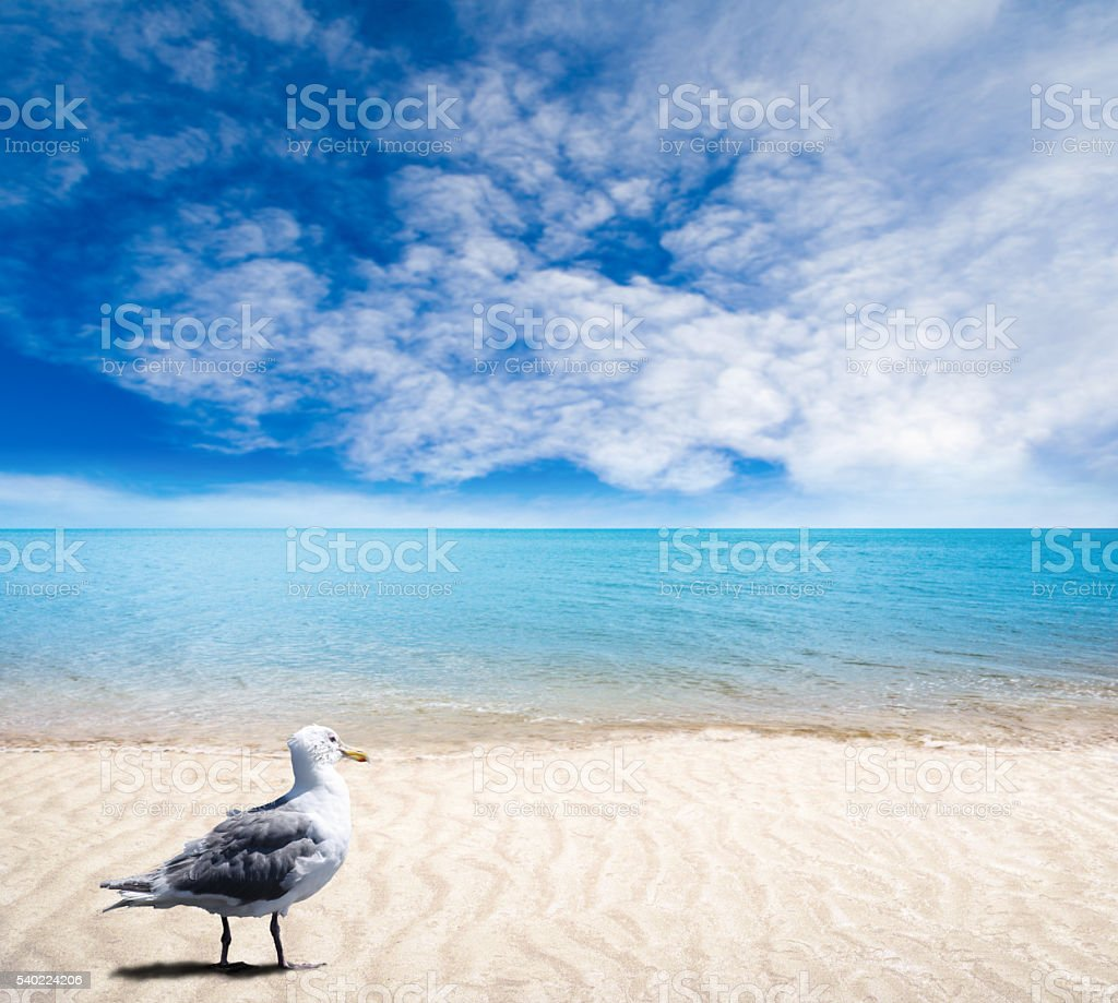 Seagull on Sandy Beach With Gentle Waves and Sunny Skies stock photo