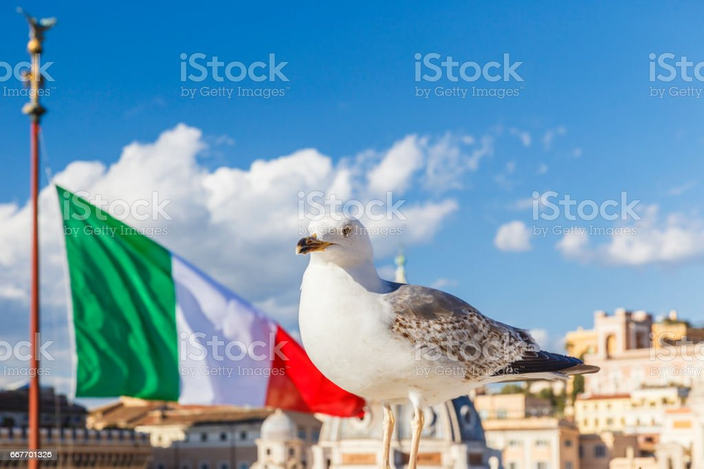 Seagull on the background of the Italian flag and blue sky stock photo