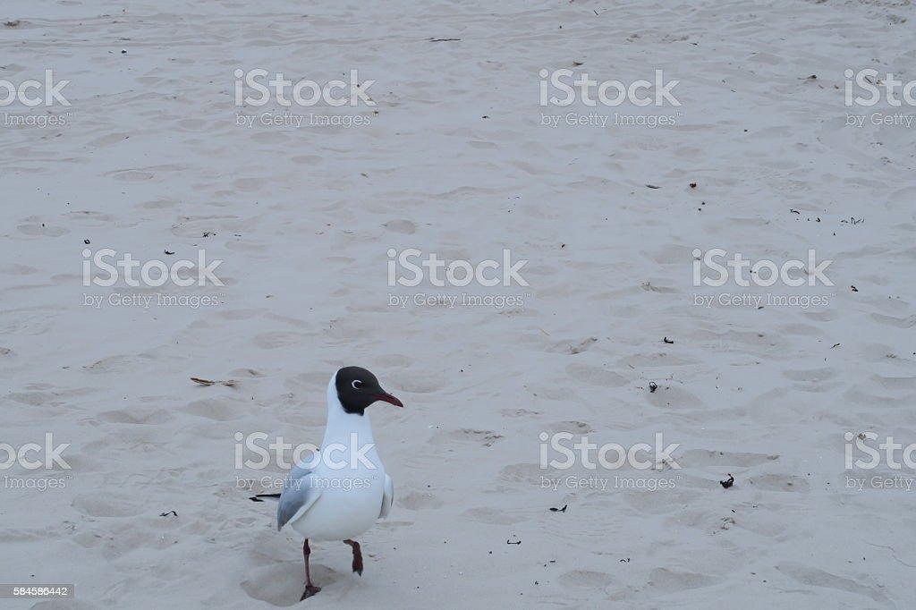 Seagull on the beach 2 stock photo