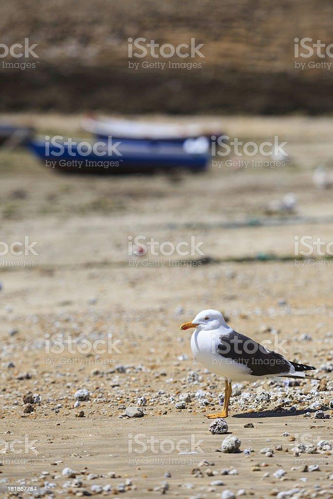 seagull on the beach royalty-free stock photo