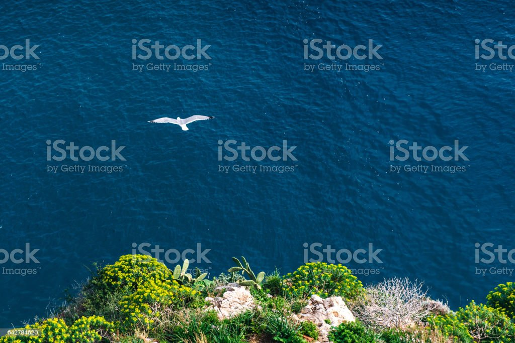 Seagull on the blue sea background stock photo