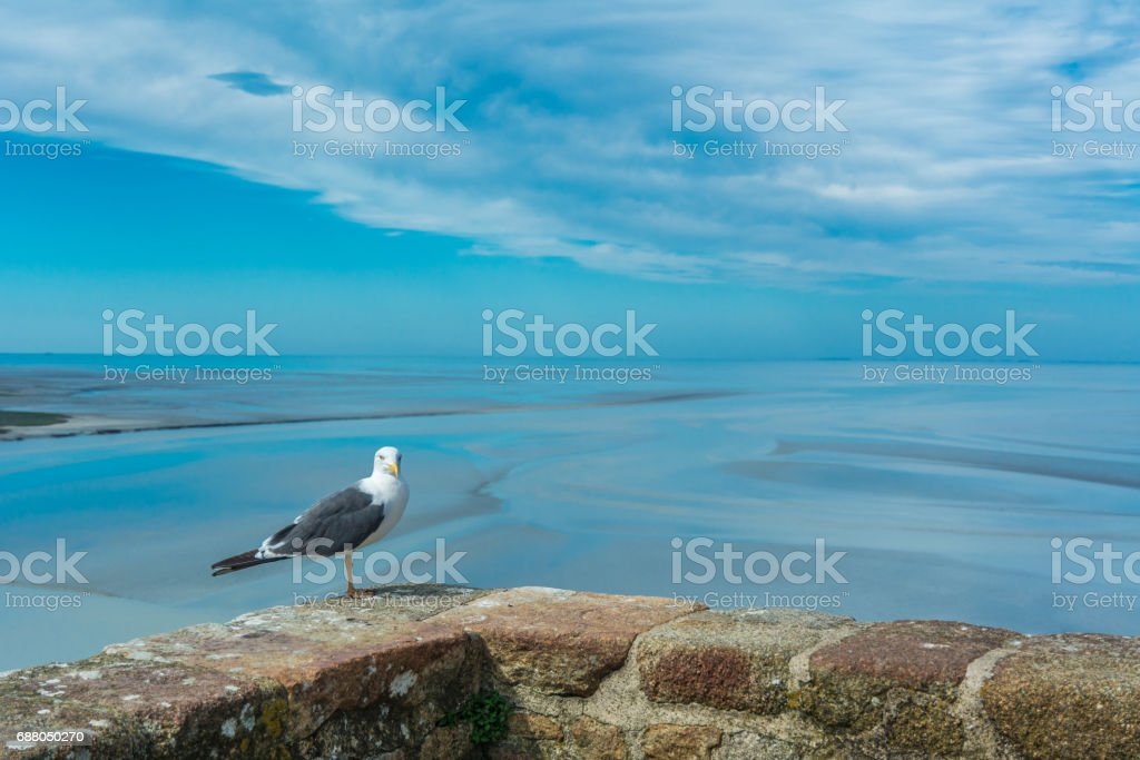 Seagull on the Mont Saint-Michel stock photo