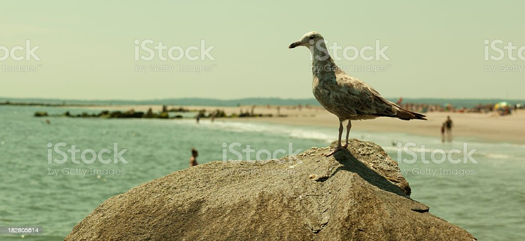 Seagull on the rock stock photo