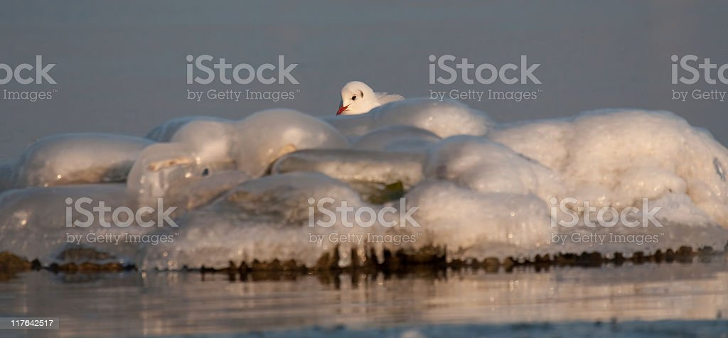 Seagull on the rocks royalty-free stock photo