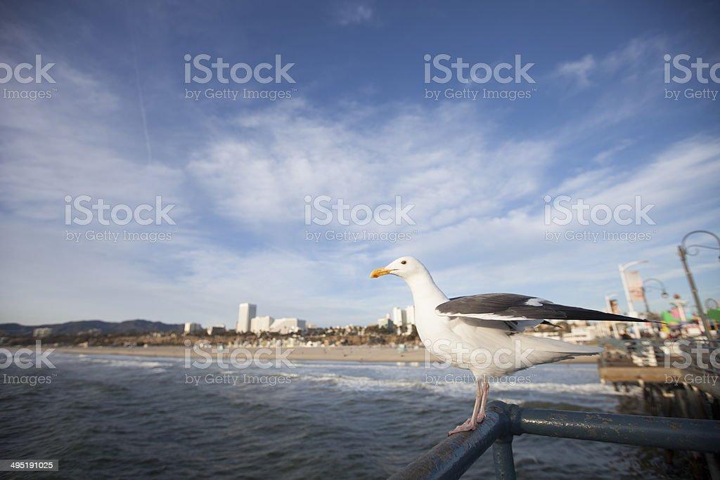 Seagull on the Santa Monica Pier royalty-free stock photo