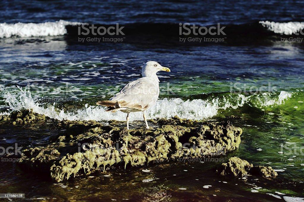 Seagull on the stone stock photo