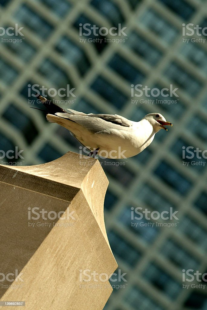 Seagull On Watch royalty-free stock photo