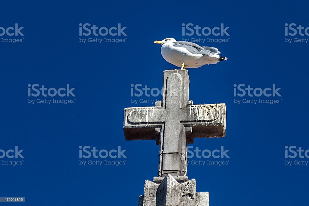 Seagull over a cross royalty-free stock photo