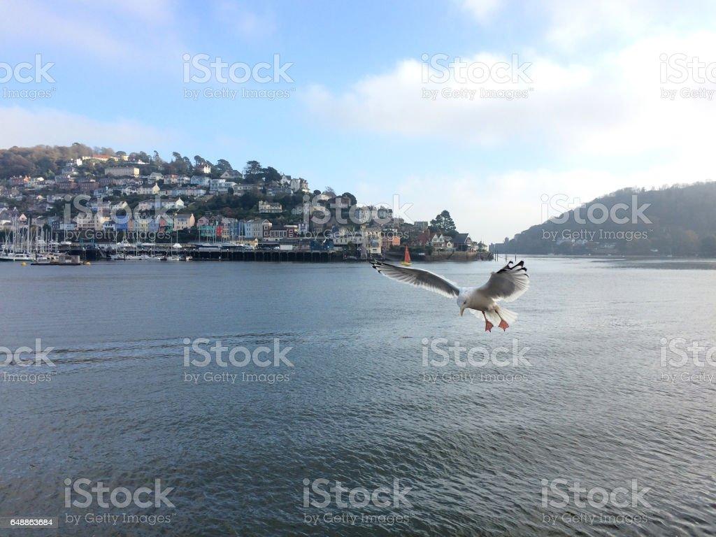 Seagull over the River Dart, Dartmouth, Devon stock photo