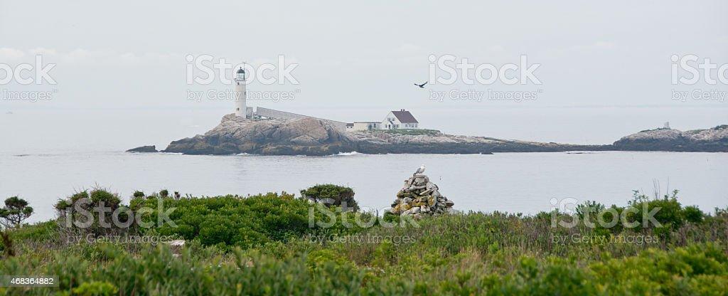 Seagull over White Island stock photo