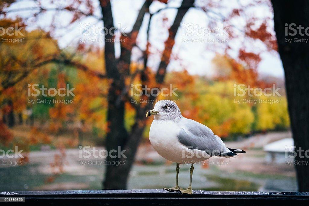 Seagull portrait in autumn stock photo