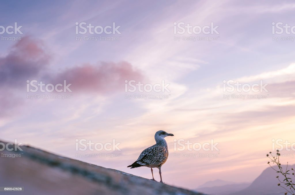 Seagull portrait in sunset Alicante. The bird is standing on a wall stone. stock photo