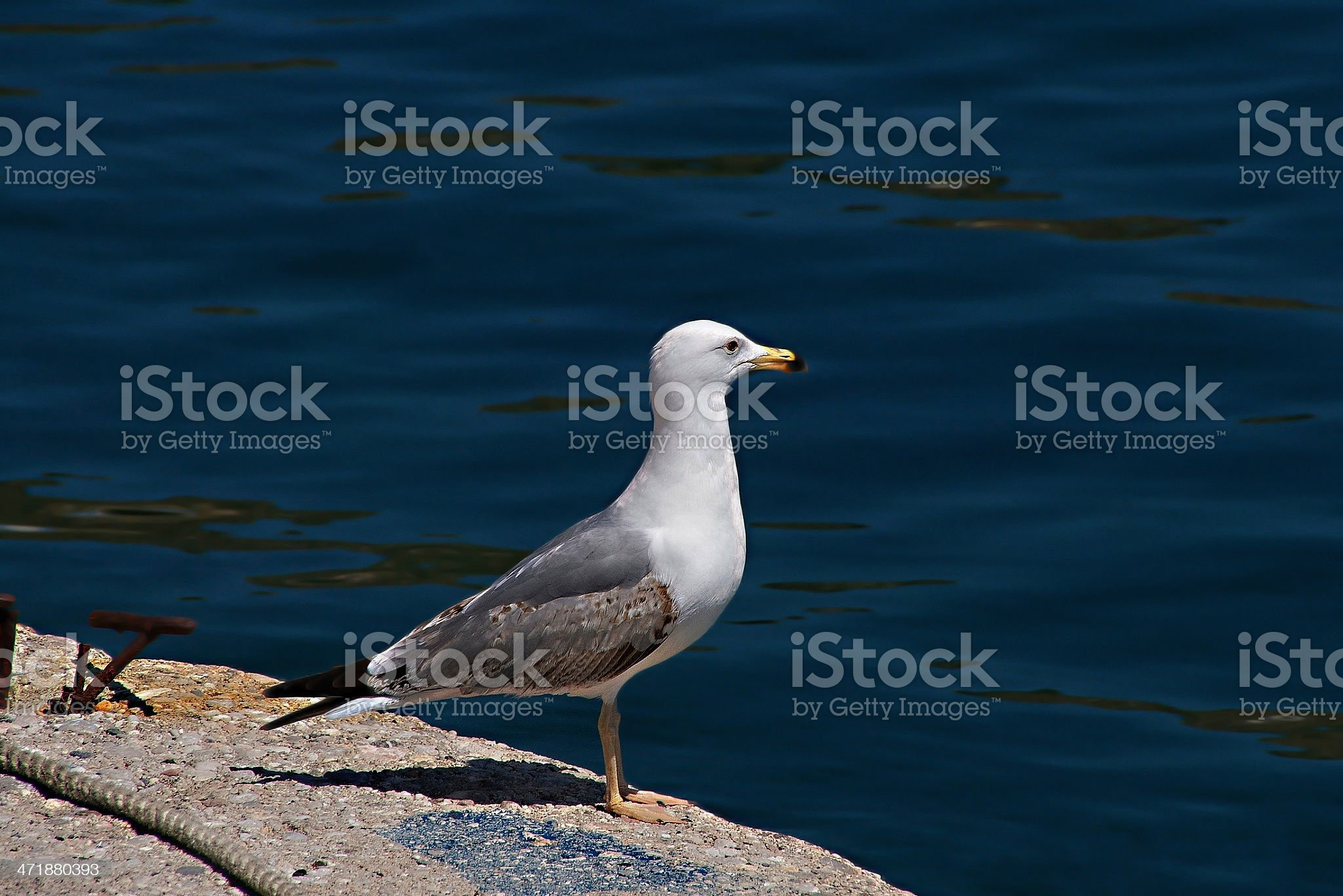 Seagull Ready To Fly royalty-free stock photo