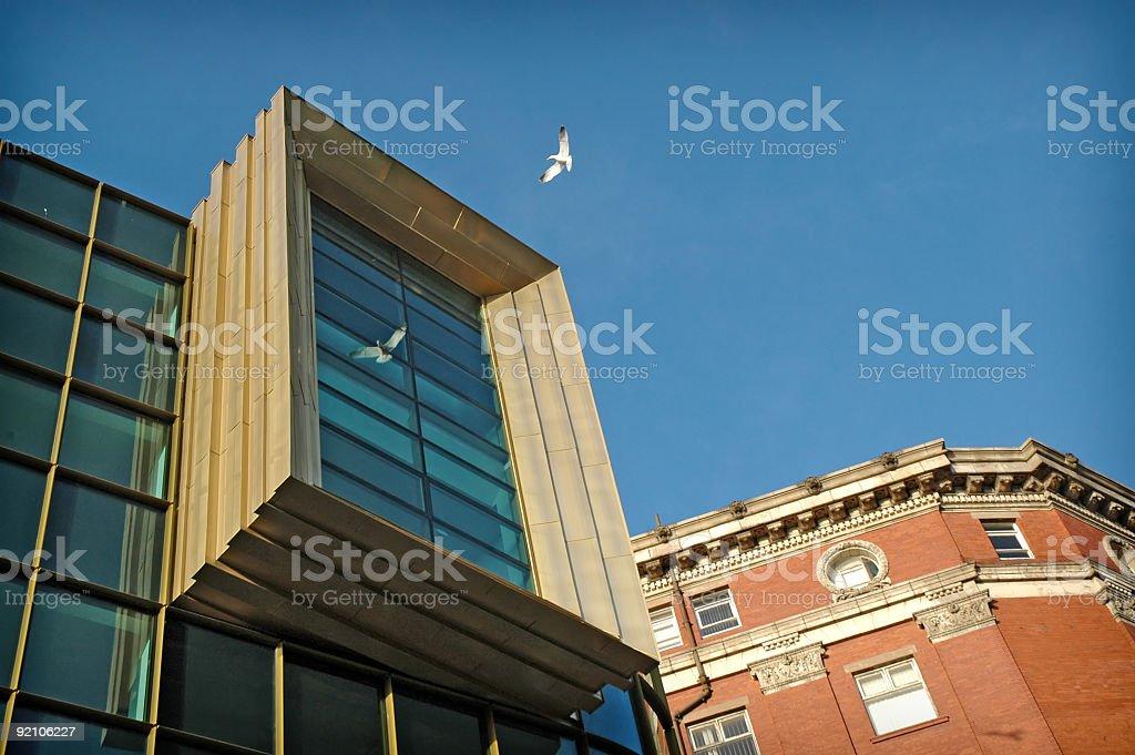 Seagull reflection royalty-free stock photo