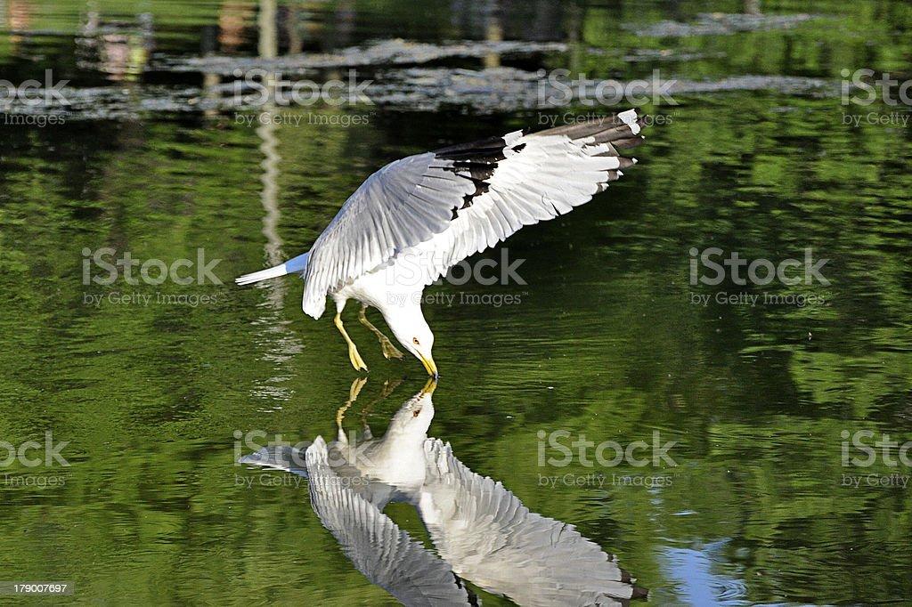 Seagull 反射区 ロイヤリティフリーストックフォト