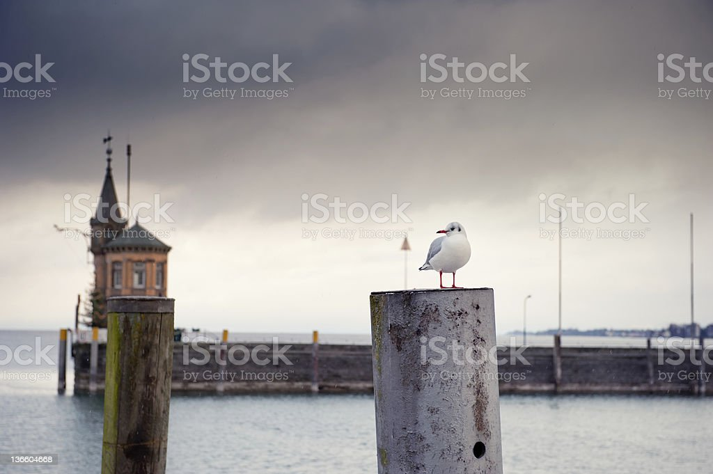 Seagull relaxes on the promenade - other format stock photo