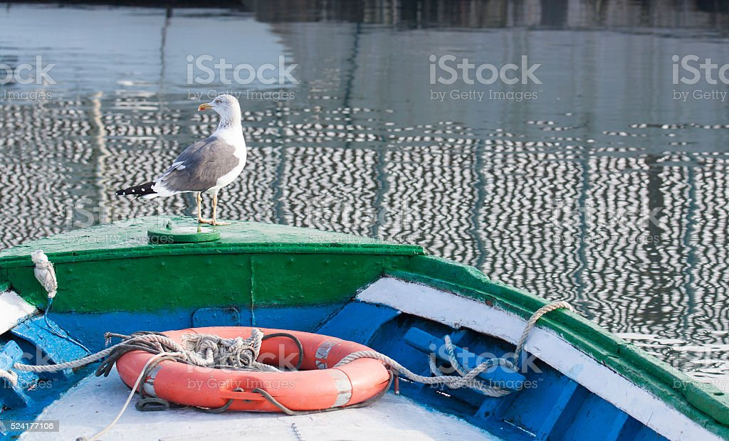 Seagull sitting on a boat in the harbor stock photo