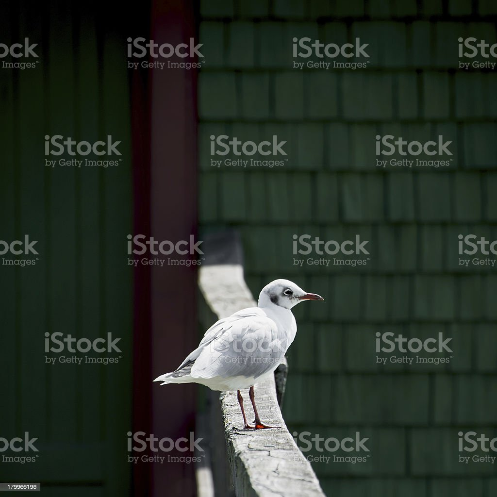 seagull sitting on a handrail stock photo