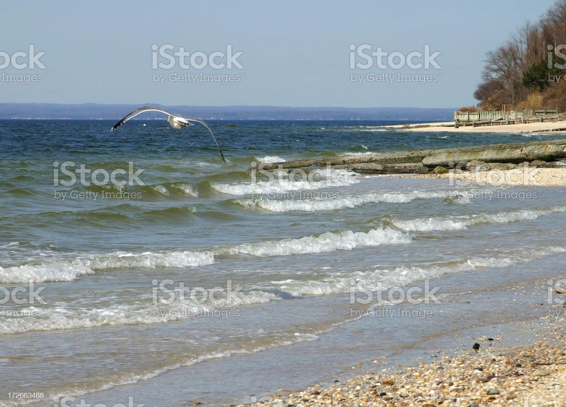 Seagull Soaring royalty-free stock photo