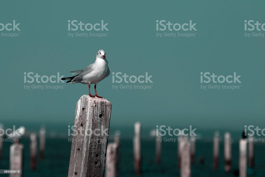 Seagull stand on a pole royalty-free stock photo