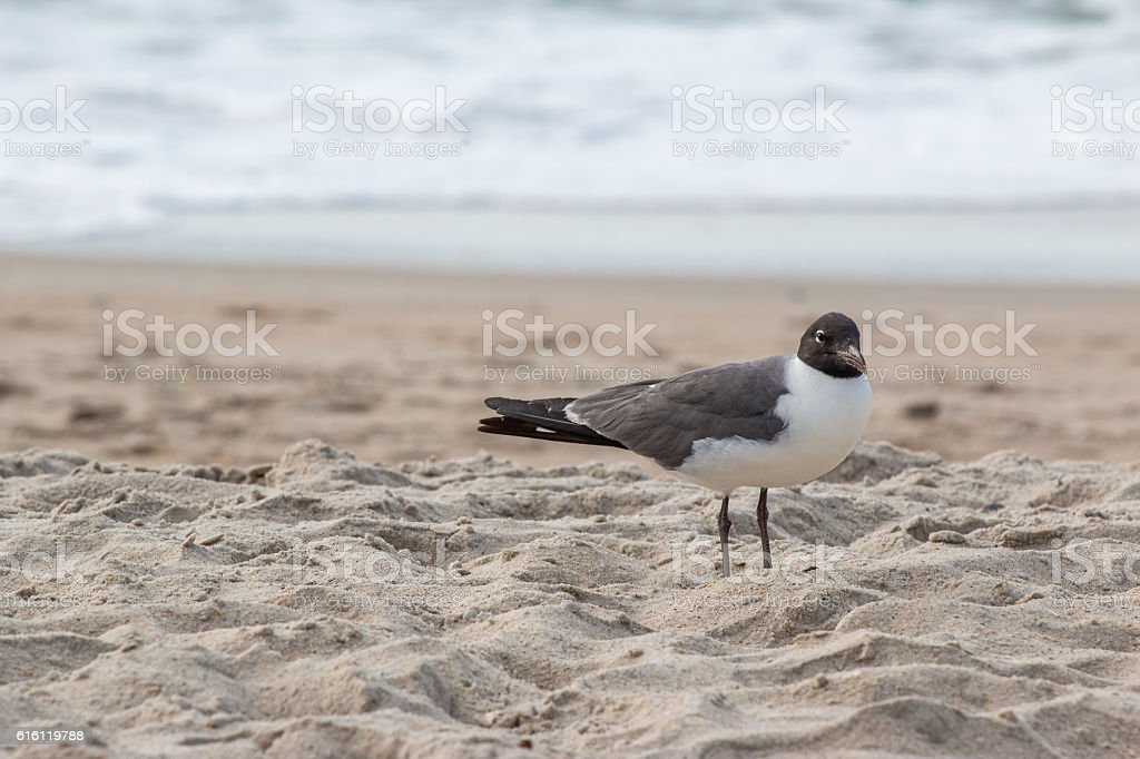 Seagull standing on beach stock photo
