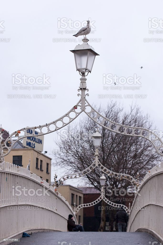Seagull standing on top of Ha'penny Bridge in Dublin, Ireland stock photo