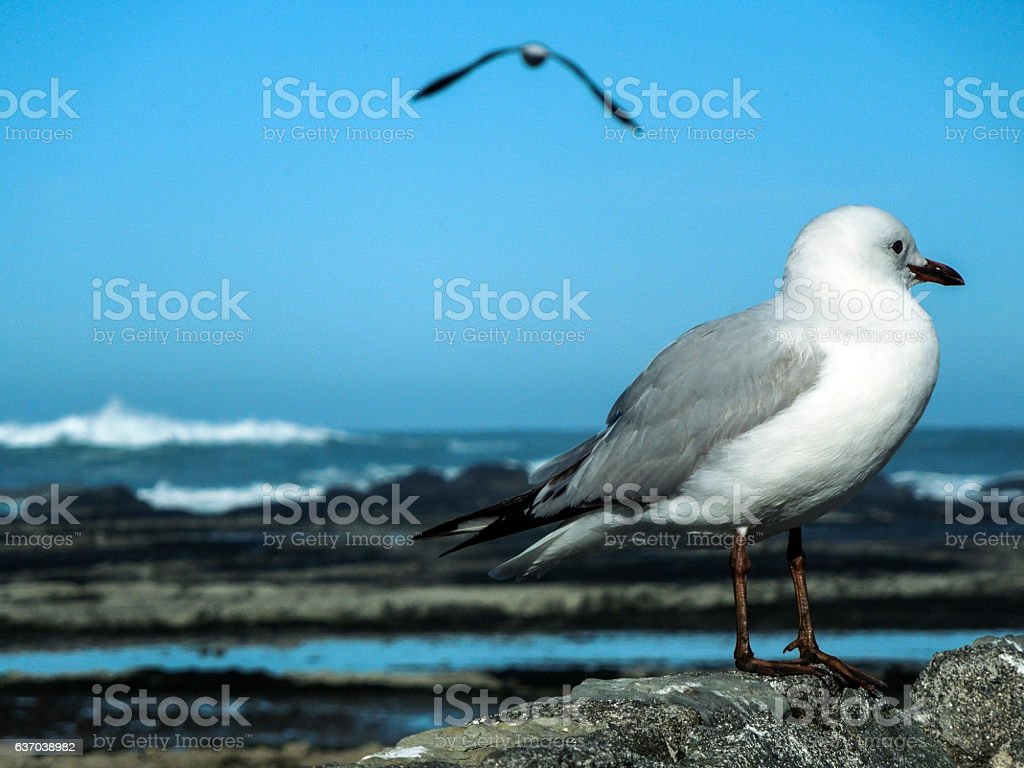 Seagull standing on wall stock photo