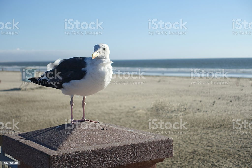 Seagull Stands on Post above Empty Beach stock photo