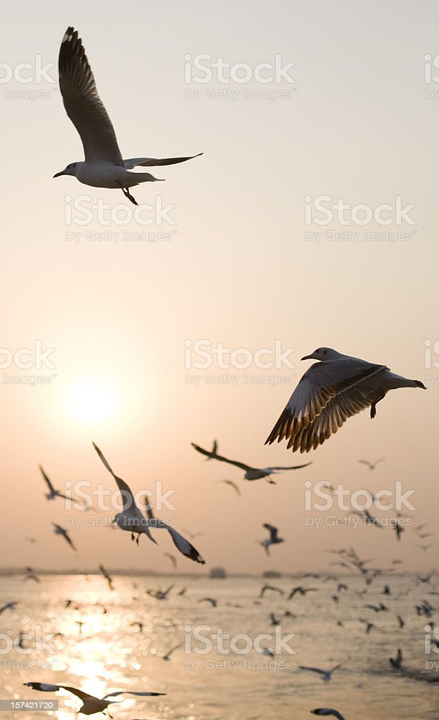Seagull sunset background. stock photo
