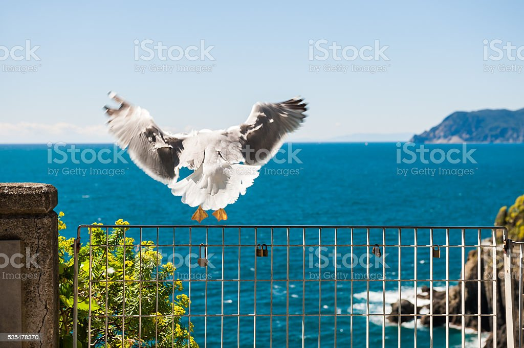 Seagull taking off from the fence stock photo