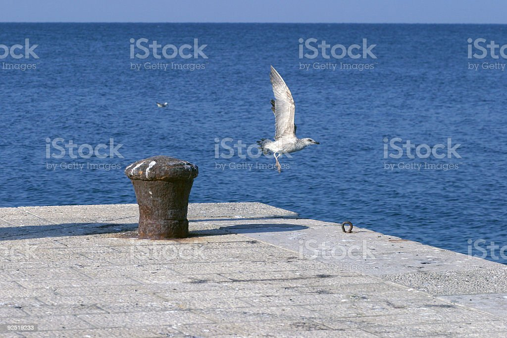 Seagull taking off royalty-free stock photo