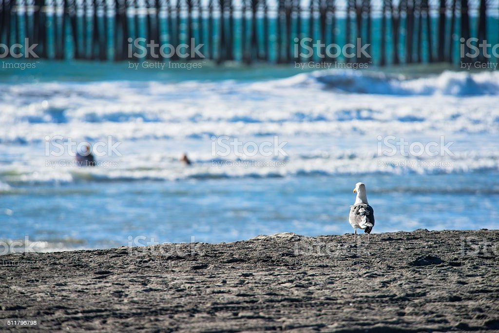 Seagull Watching the Ocean From the Sand stock photo