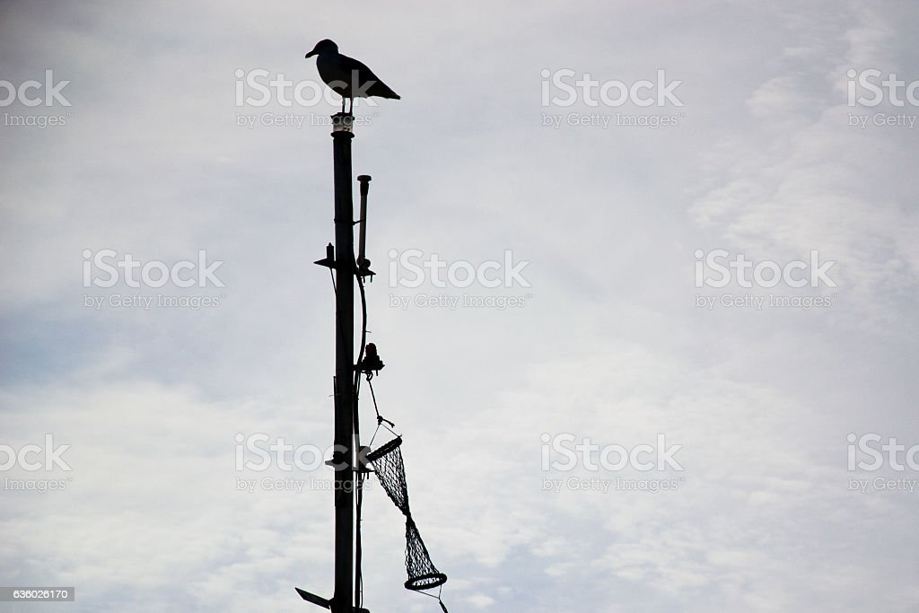 Seagull watching the sea from the top of a boat. stock photo