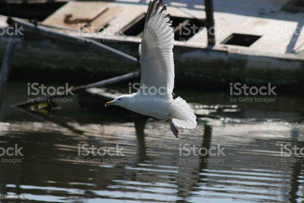 seagull with old boat in background royalty-free stock photo