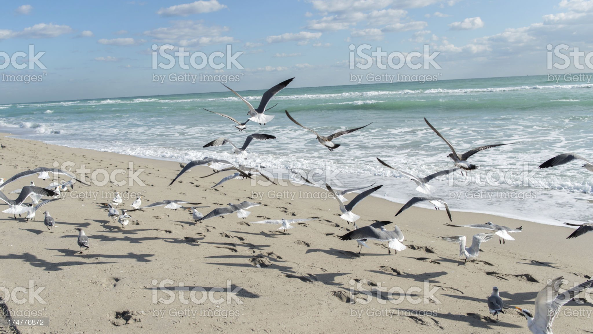 Seagullls landing on the beach royalty-free stock photo