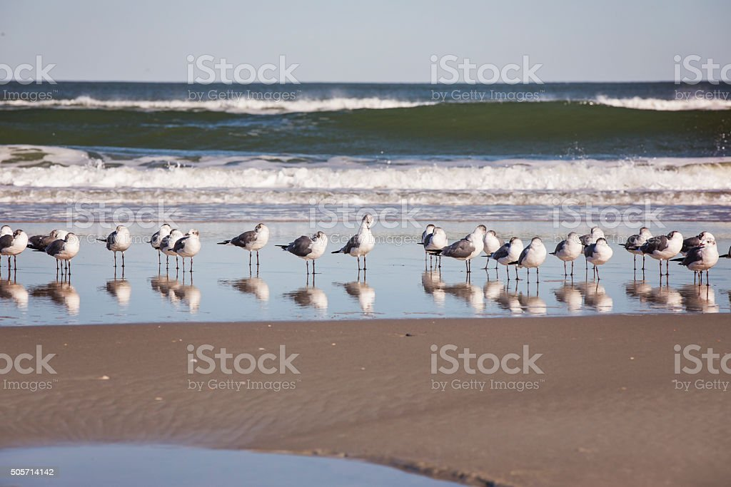 Seagulls all in a Row stock photo