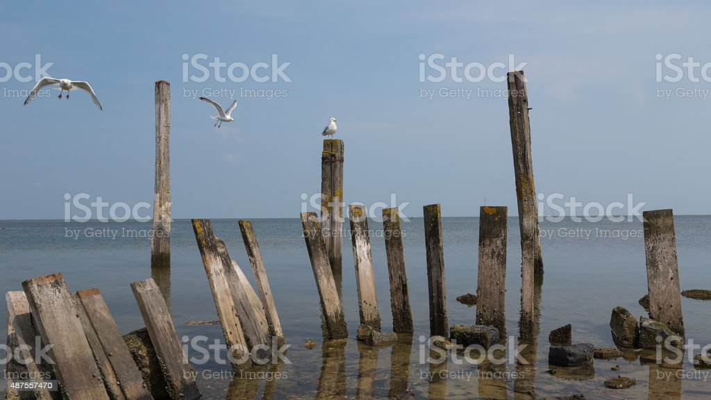 Seagulls amongst weathered posts in the water stock photo