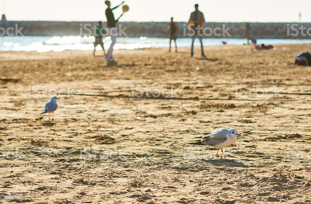 Seagulls and people in Sitges' beach stock photo