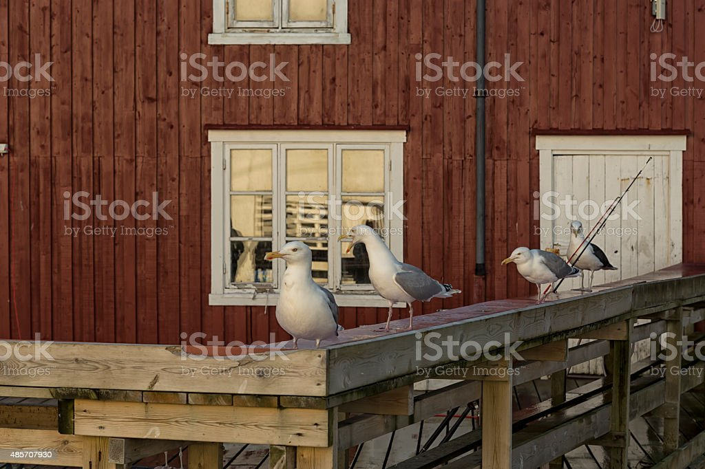 Seagulls and rods royalty-free stock photo