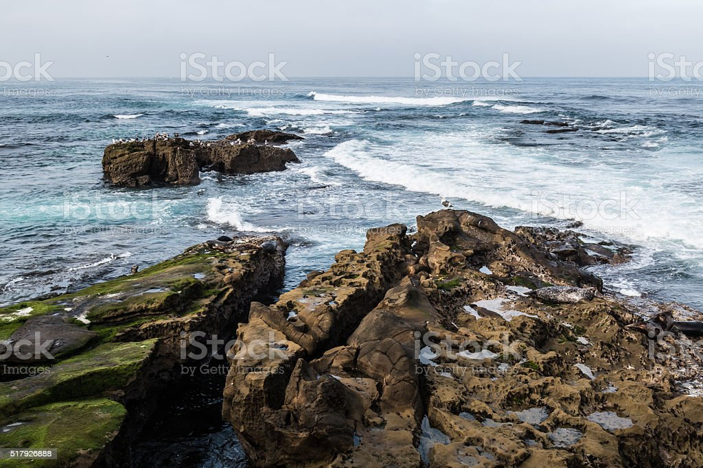 Seagulls and seals Rest on Rock Formations in La Jolla stock photo