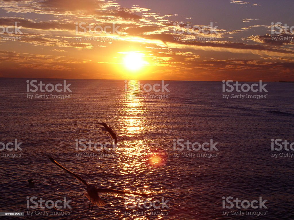 Seagulls and Sunsets royalty-free stock photo