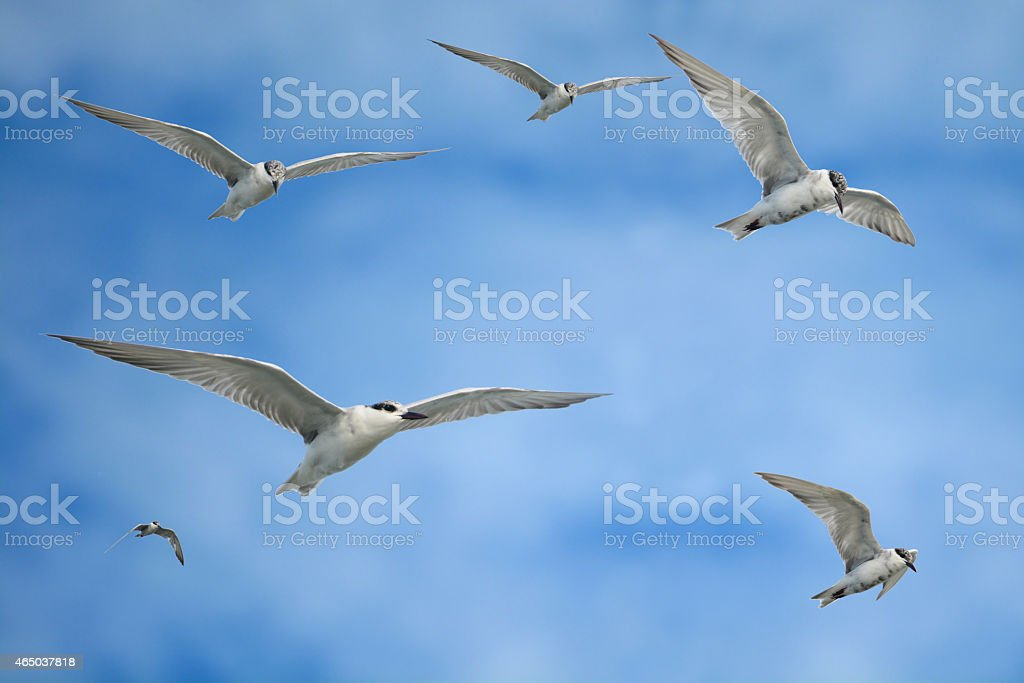 Seagulls are flying in blue sky royalty-free stock photo