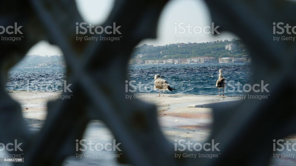 Seagulls at bosphorus sea side in Istanbul stock photo