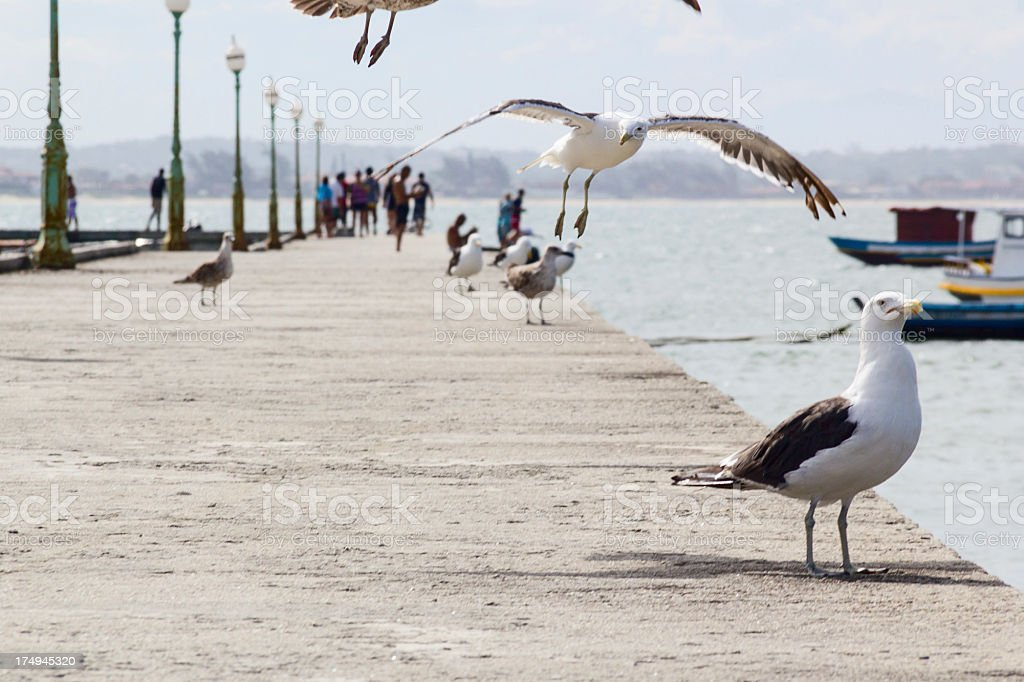 Seagulls at pier royalty-free stock photo