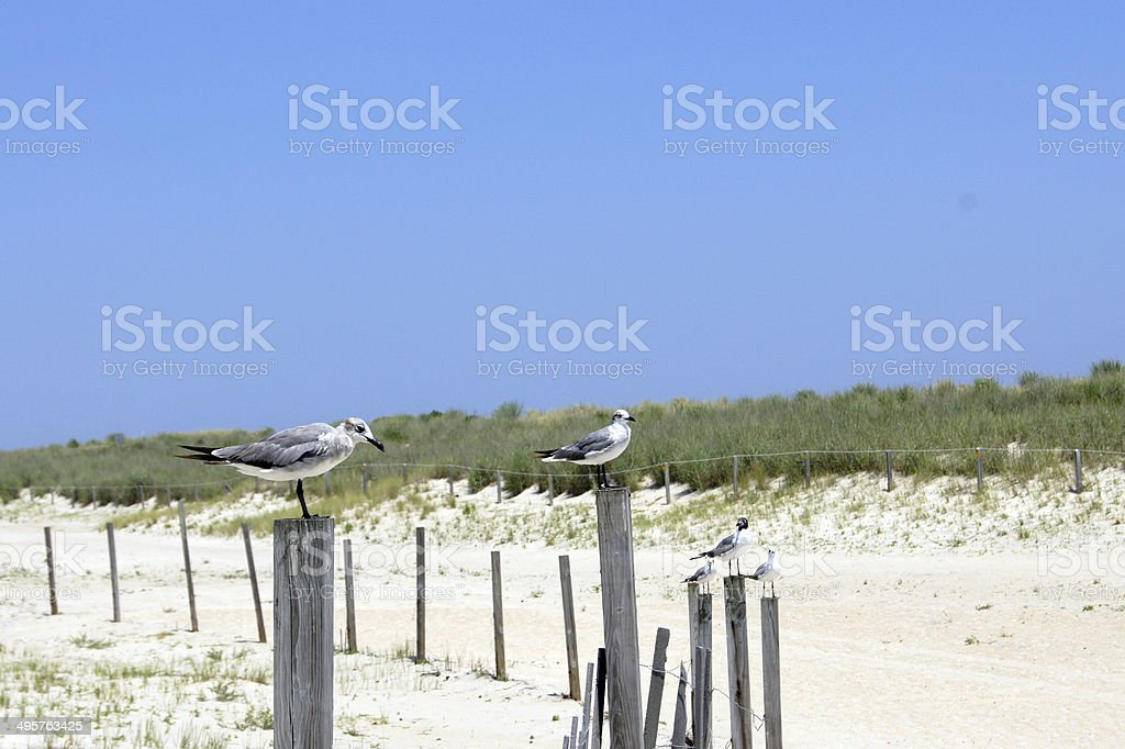 Seagulls at the Beach royalty-free stock photo