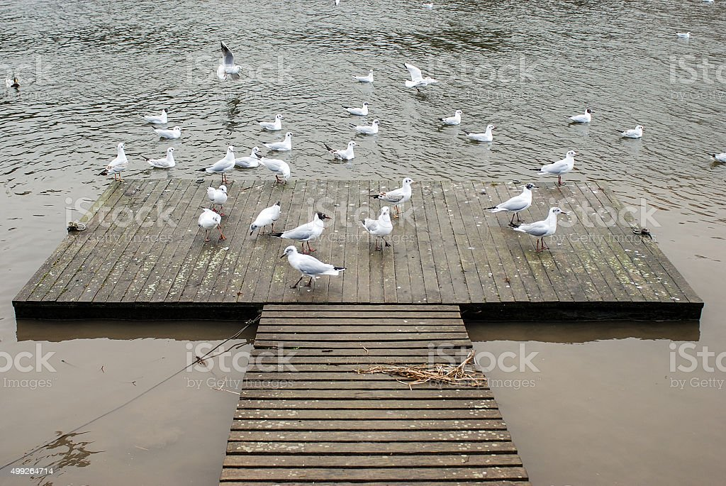 Seagulls at the pier stock photo