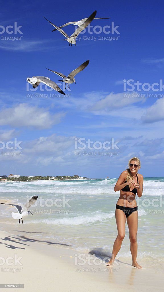 Seagulls feedeing in Mexico royalty-free stock photo