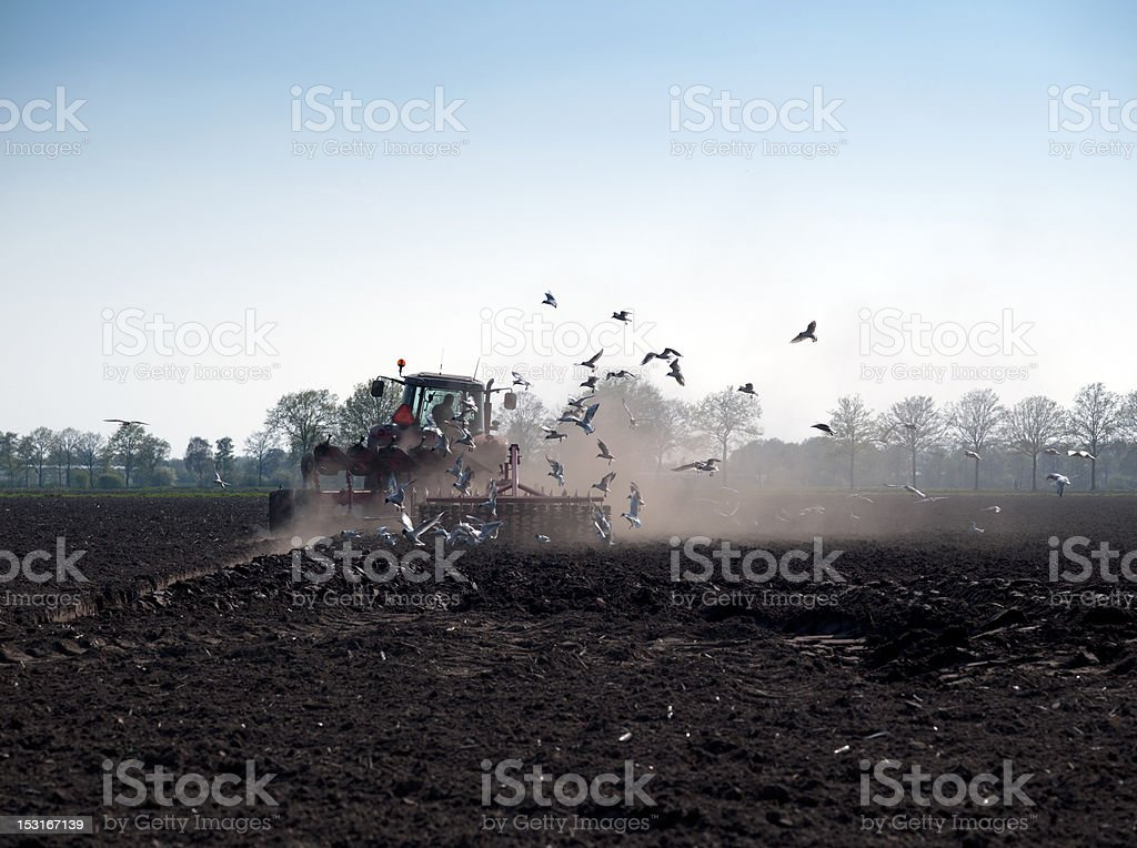 seagulls fly on tractor royalty-free stock photo